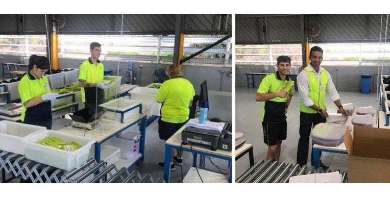Westlab Develops Locally Made Face Shields