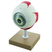 Model, 5x Human Eye, 6 Parts